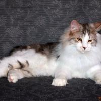 SOS Котику нужна помощь. Отдается бесплатно.