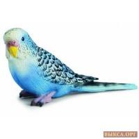 Приму/куплю попугая мальчика